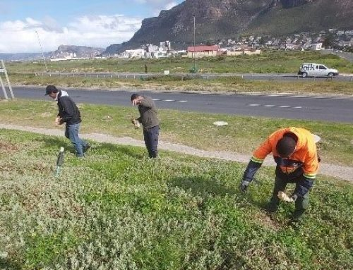 Catching up with Muizenberg East Biodiversity Cluster